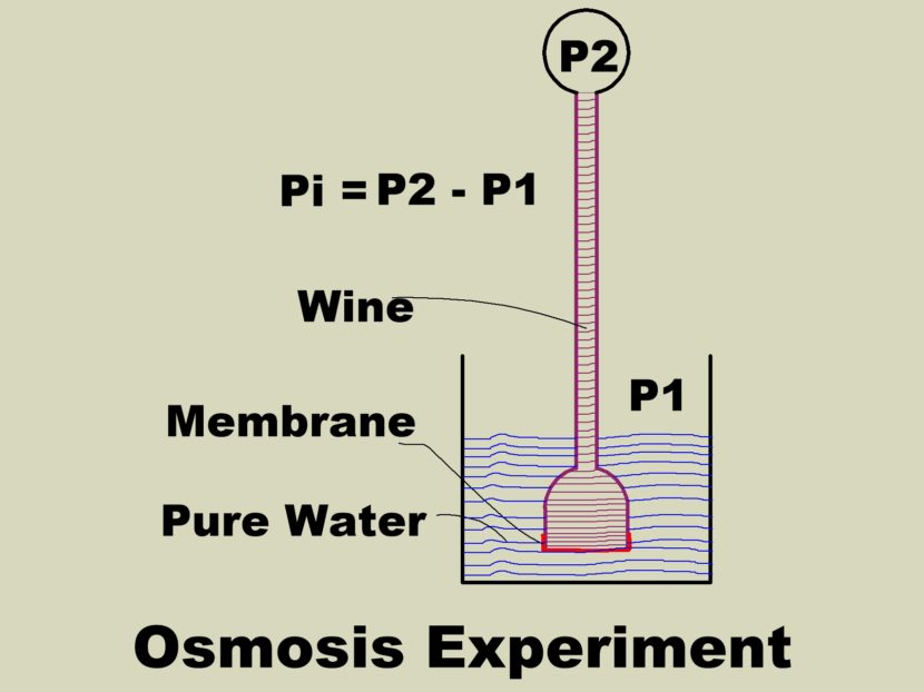 Osmosis Experiment
